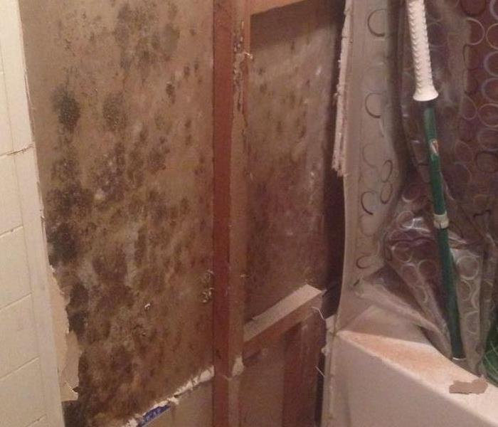 Mold Remediation in Indianapolis, IN