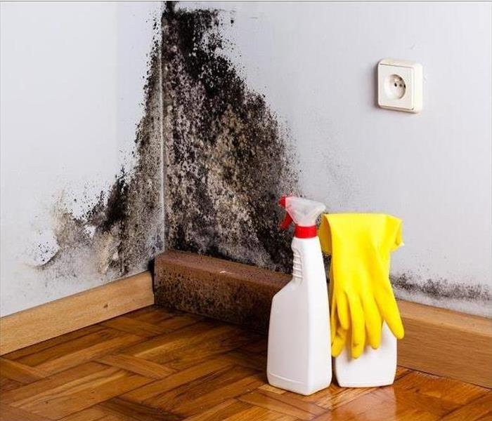 Top Ways To Prevent Mold Growth In Your Home